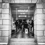 Whitetailhk