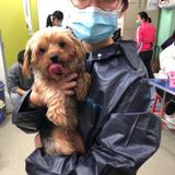 Lion Pet Care 寵物美容及照顧服務