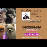 Norris Pet Grooming Service
