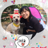 Pet Sitting And Boarding - Pet Sitter-波宿