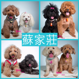 Pet Sitting And Boarding - Pet Sitter-蘇家莊寵物酒店