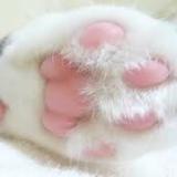 達樂寵物精品美容