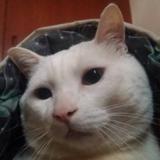 model: 貓貓