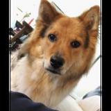 狗狗愛心保姆 Experienced Pet Sitter