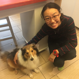 Pet Grooming - dog grooming  - Lion Pet Care-Lion Pet Care 上門寵物美容