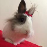 Jofi Bunny Grooming