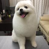專業狗狗美容護理師/專業狗狗保母