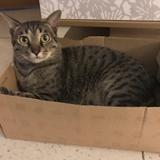 貓咪上門清潔服務