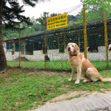 Kennel Van Dego (HK)Ltd