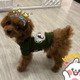 Pet Sitter 寵物保姆&寵物美容服務