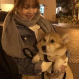 10年照顧狗狗經驗,平日...