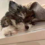 寵物美容師,6年經驗