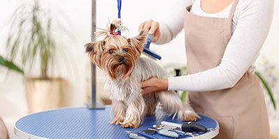 2018 Average Cost for the Pet Grooming in Hong Kong